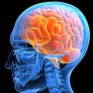 Головной мозг человека