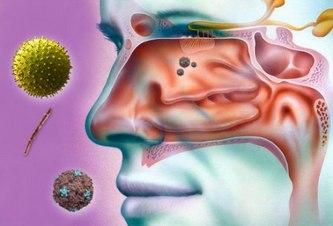 Болезнетворные вирусы и бактерии