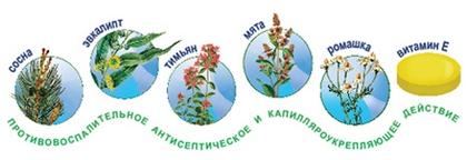 Растения, экстракты которых входят в Пиносол