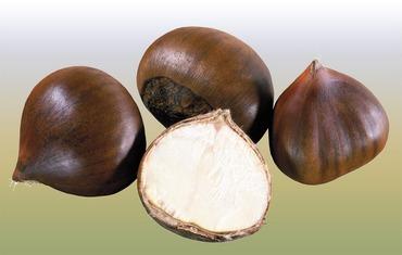 4 сорванных плода каштана