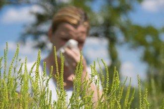 Лето - пора цветения и аллергии